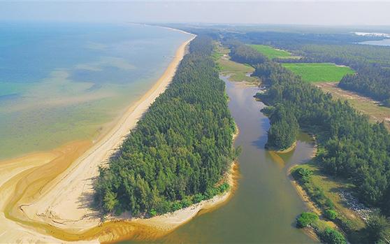 昌江海防林:绿色长城 海岸卫士