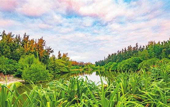 """28年、338万株,昌江有一群""""绿色娘子军""""在造林"""